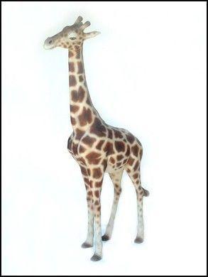 Dekofiguren mieten & vermieten - Giraffen Figuren, Giraffe, Figur, Großtier, Afrika, afrikanisch, Zoo, Savanne, Serengeti, Tier, Wildtier, Dekoration in Kamp-Bornhofen