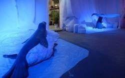 Dekofiguren mieten & vermieten - Robbe auf Eisscholle Figur, Figur, Eisscholle, Robbe, Seehund, Seelöwe, Unterwasser, Wasser, Meer, Ozean, Arktis, Polar in Kamp-Bornhofen