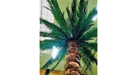 Dekorationsservice mieten & vermieten - Künstliche Palmen  in Lahnstein