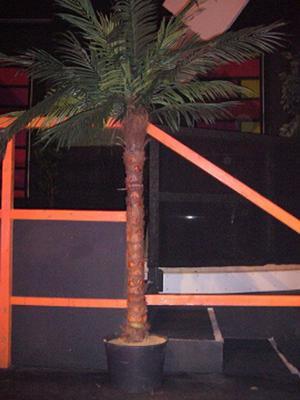 Pflanzen mieten & vermieten - Kunstpflanze Palme 1,90m in Reinstädt