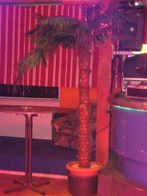 Pflanzen mieten & vermieten - Kunstpflanze Palme 3,0m in Reinstädt