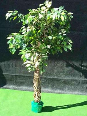 Pflanzen mieten & vermieten - Kunstpflanze, Ficus in Reinstädt