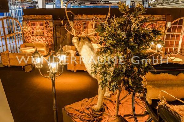 Pflanzen mieten & vermieten - Ahornbaum - -WUNDERRÄUME GmbH vermietet: Dekoration/Kulisse für Event, Messe, Veranstaltung, Incentive, Mitarbeiterfest, Firmenjubiläum in Lichtenstein/Sachsen