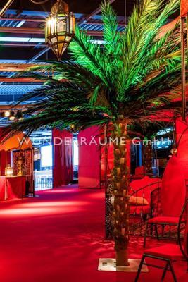 Pflanzen mieten & vermieten - Palme XL - WUNDERRÄUME GmbH vermietet: Dekoration/Kulisse für Event, Messe, Veranstaltung, Incentive, Mitarbeiterfest, Firmenjubiläum in Lichtenstein/Sachsen