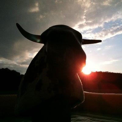 Bullriding mieten & vermieten - Bullriding - American Western Rodeo inkl. 19% MwSt. in Münnerstadt